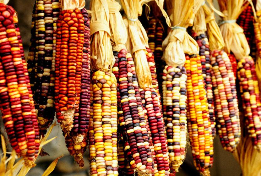 7 Common Foods Eaten in the 13 Colonies